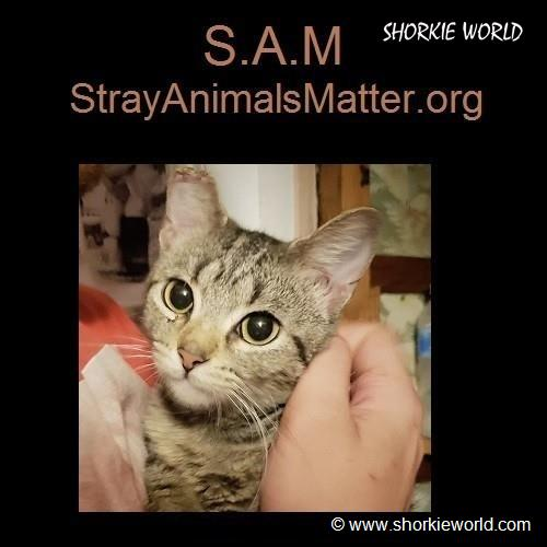 S.A.M - StrayAnimalsMatter.org - Our 501 (c3) Non Profit
