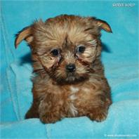 /images/puppies/large/16brett-adopted-by-lisa-and-family_IMG_0361.JPG