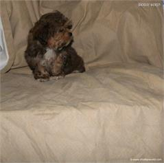 /images/puppies/large/37timmy-adopted-by-theresa-family_IMG_1176.JPG