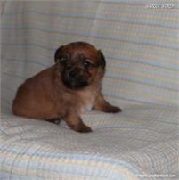 /images/puppies/large/41peanut-im-adopted-stan-cindy_IMG_5762.JPG