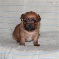 /images/puppies/large/41peanut-im-adopted-stan-cindy_IMG_5764.JPG