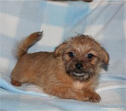 /images/puppies/large/41peanut-im-adopted-stan-cindy_IMG_65100.JPG