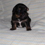 /images/puppies/large/44tucker_IMG_5723.JPG