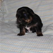 /images/puppies/large/44tucker_IMG_5725.JPG