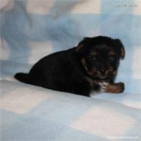 /images/puppies/large/44tucker_IMG_5926.JPG