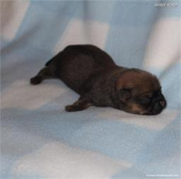 /images/puppies/large/51billy_IMG_9030.JPG