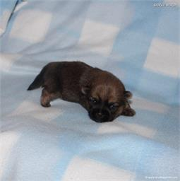 /images/puppies/large/51billy_IMG_9161.JPG