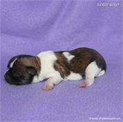 /images/puppies/large/59bella_IMG_2288.JPG
